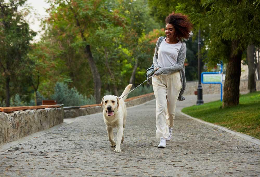 Woman walking a yellow lab on a stone sidewalk