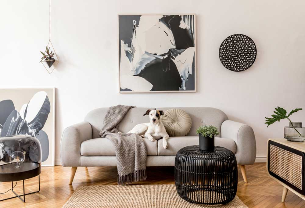 Brown and white dog sitting on gray couch in black and white color schemed living room