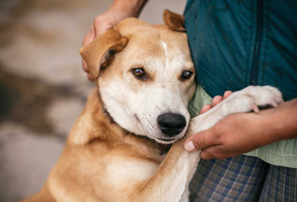 Dog leaning on persons hip with paw in their hand