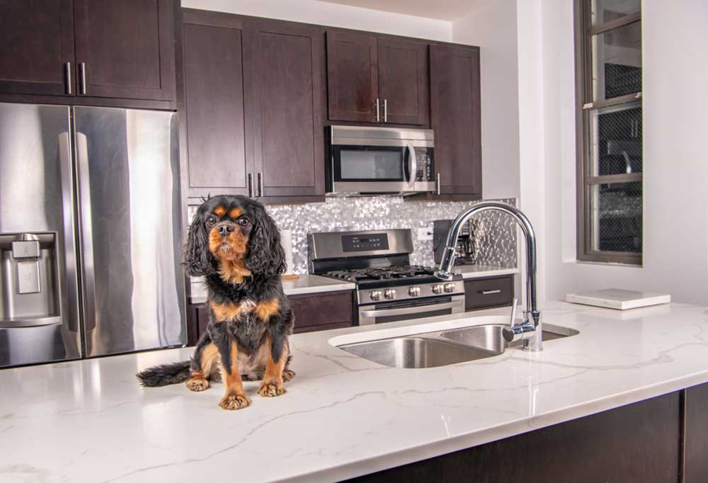Small black and tan dog sitting on counter top