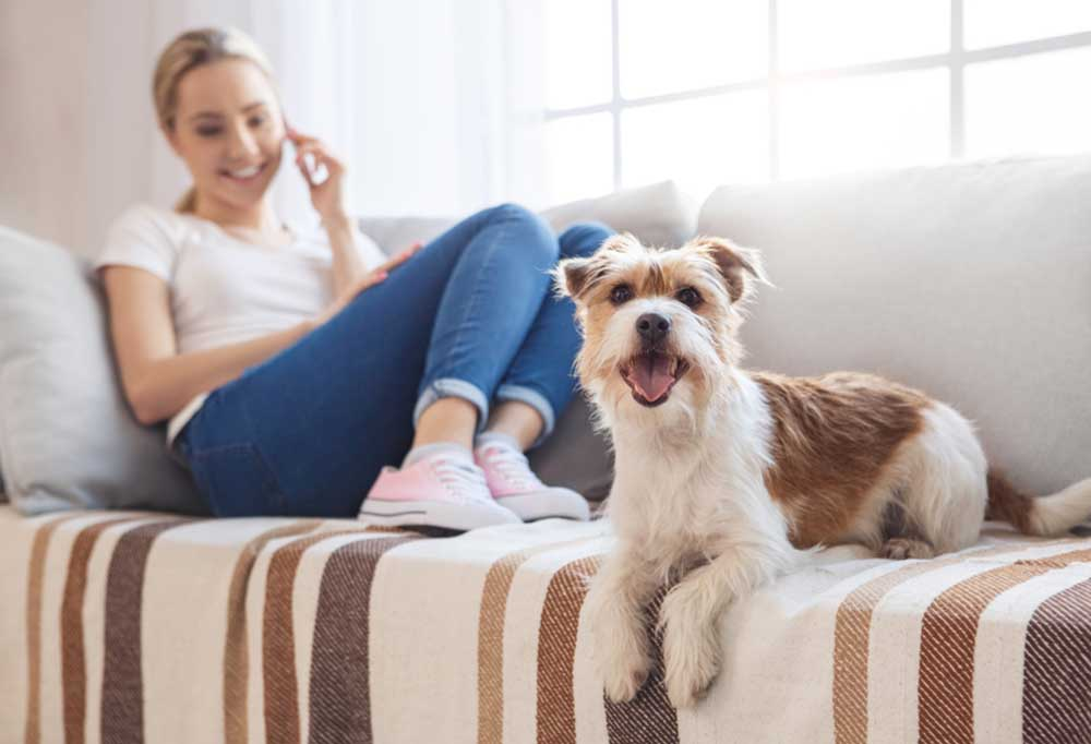 Woman on couch on the telephone next to shaggy brown and white dog