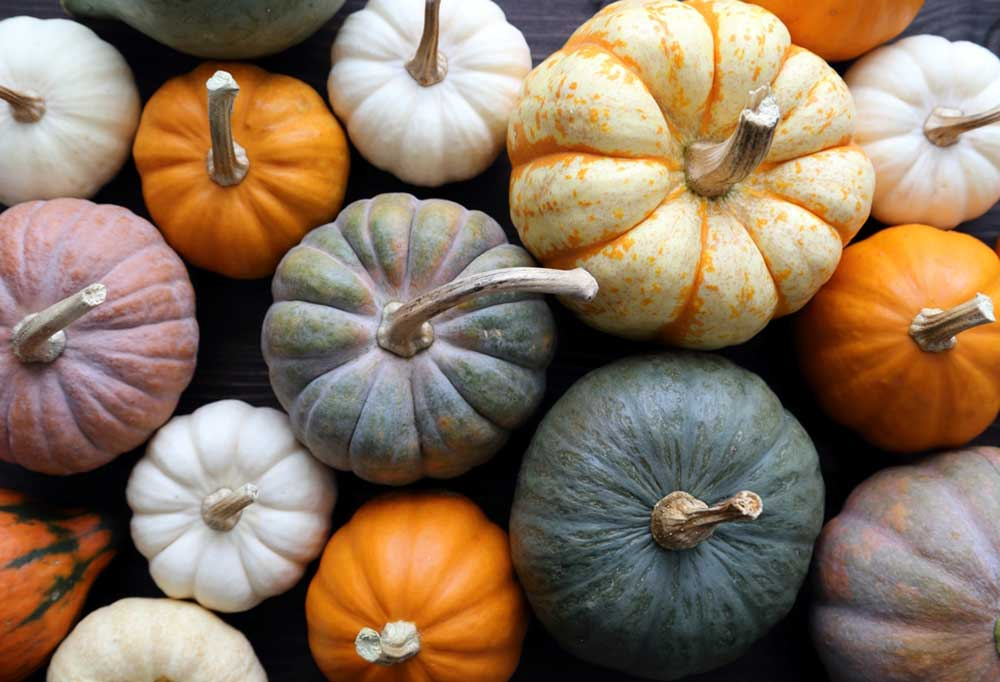 Overhead view of a variety of pumpkins