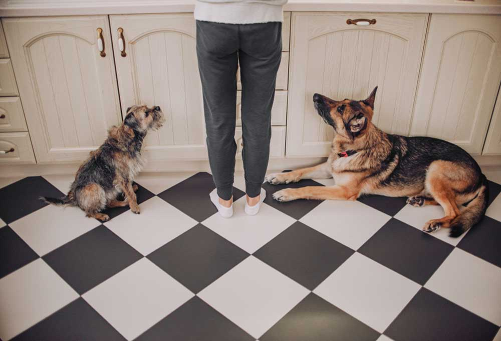 Backside lower body view of a person standing up to a counter with dogs laying on a checkerboard floor