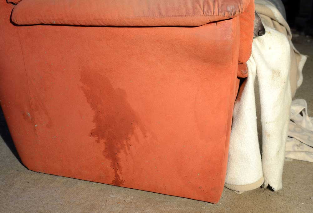 Orange couch with pee stain down the side