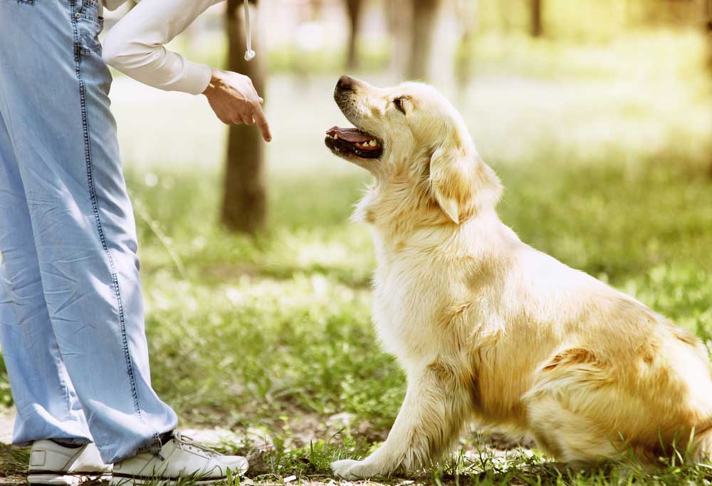 Woman pointing at ground with one finger while golden retriever puppy sits.