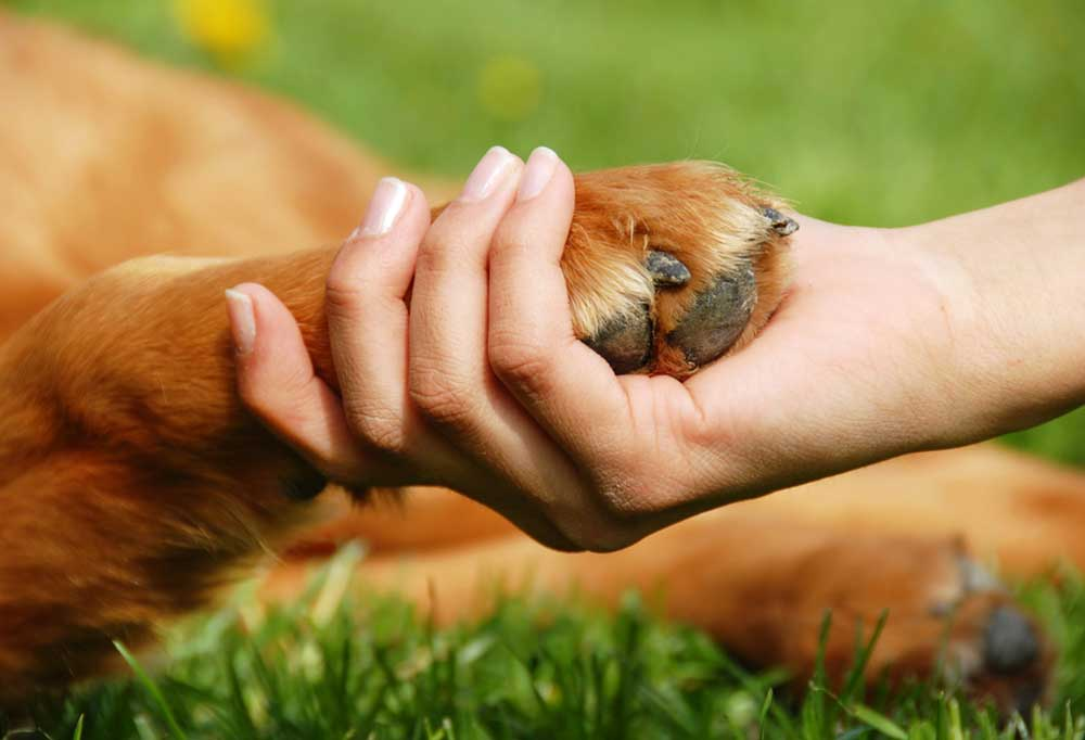 Clos up of dog paw in a human hand
