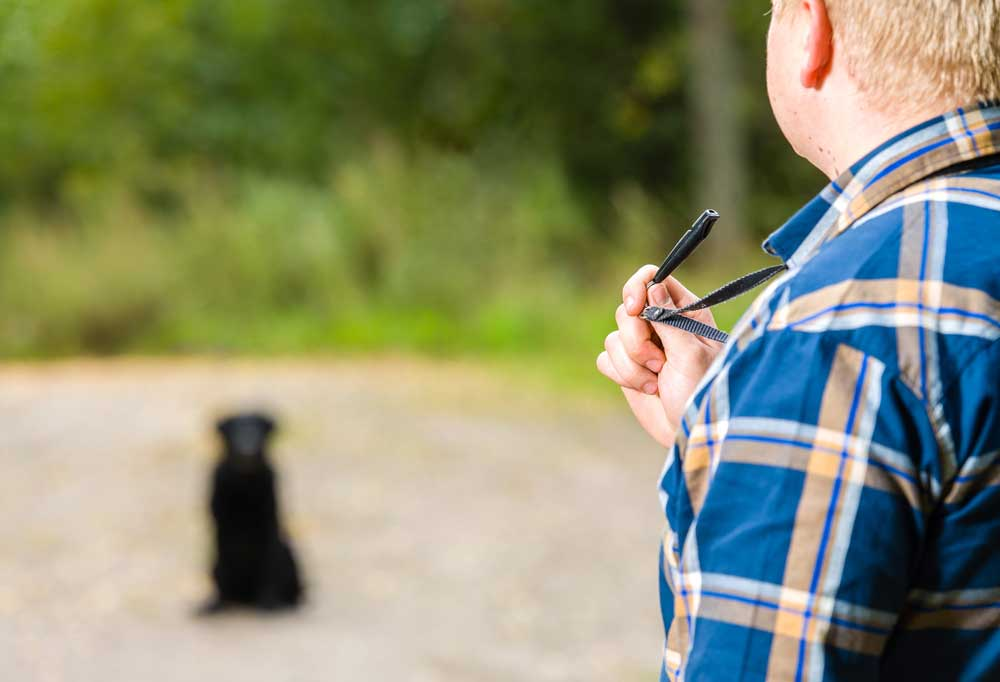 Person in a blue plaid shirt holding a dog whistle with a black dog blurred in the background