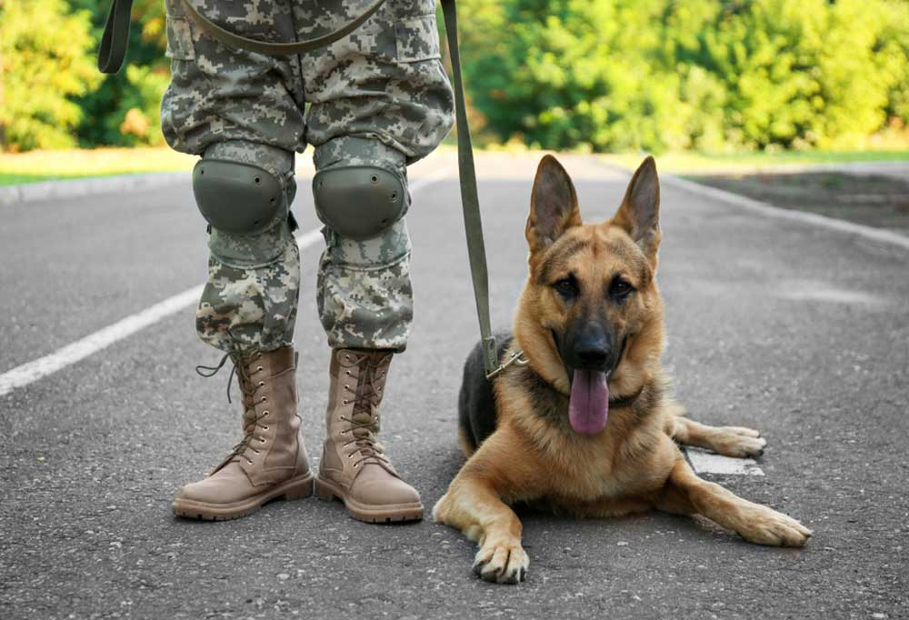 Person in military uniform standing on a road with trees in the background with a German Shepherd laying on the road beside them.