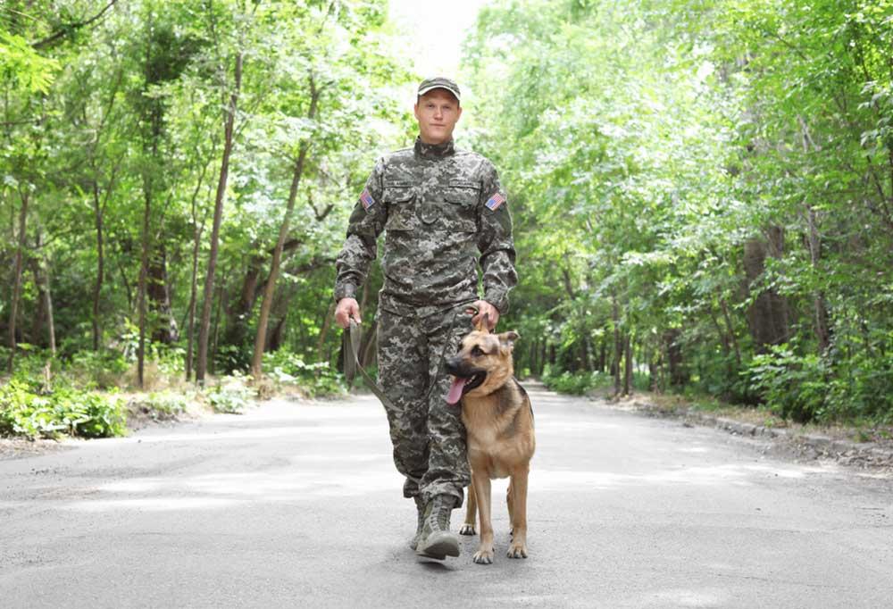 Soldier walking down a wood lined road  with a German Shepherd heeling and walking beside him