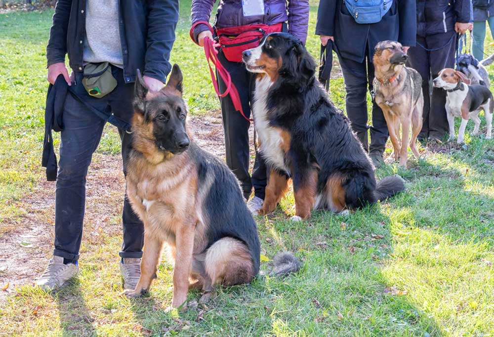 Variety if dogs with their owners, outdoors in a training session.
