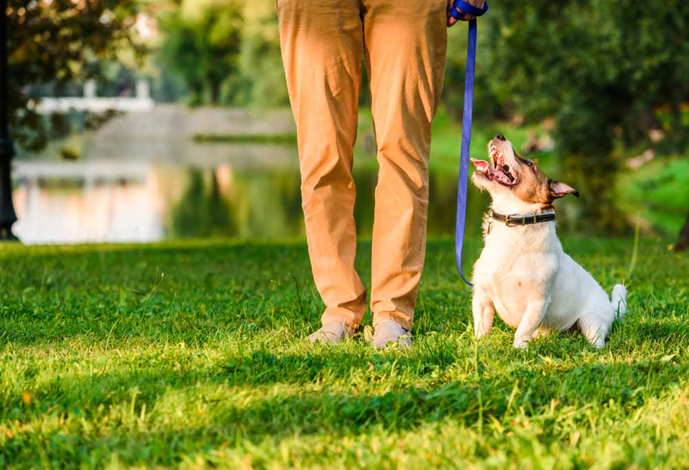 Pair of legs in tan pants next to a Jack Russell Terrier on a blue leash outdoors next to pond