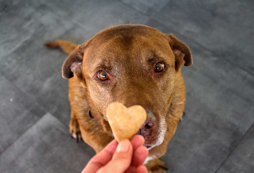 Close up of brown dog with brown eyes receiving a heart shaped treat