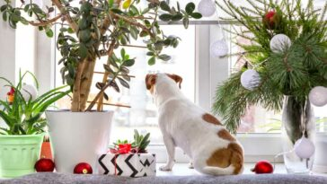 Jack Russell Terrier sitting in windowsill among potted plants and decorations