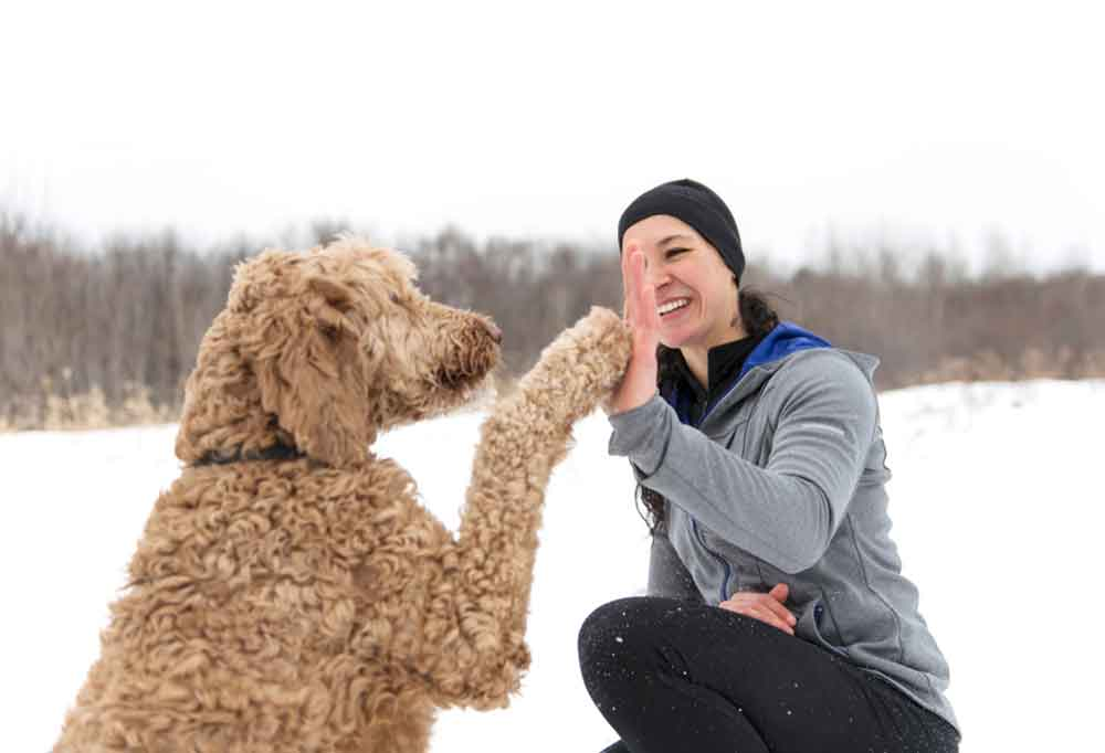 Woman teaching Goldendoodle to high five in the snow