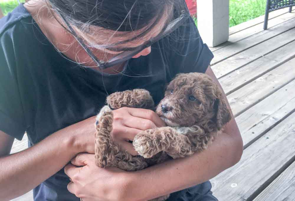 Person sitting on a porch holding a toy Goldendoodle puppy