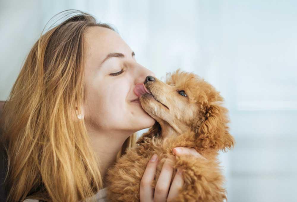 Poodle kissing a woman's face.