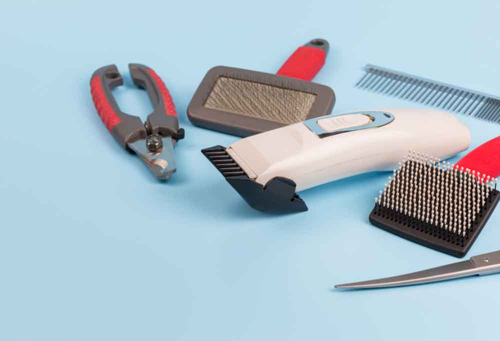 Dog grooming tools on a blue background.
