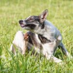 Dog with back foot stretched up to scratch behind its ear while sitting in the grass