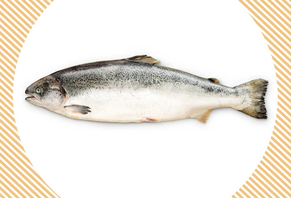 Whole salmon on a white background with decorative edges