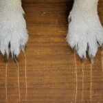 two white dog paws dragging claw marks down a piece of wood