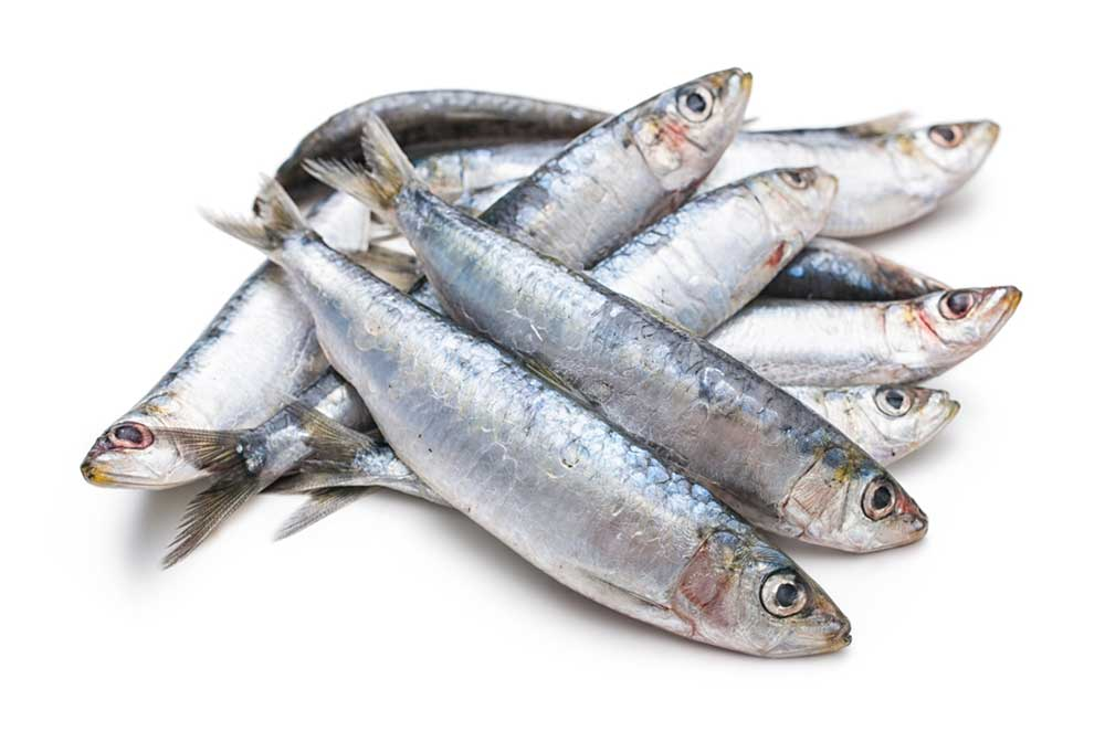 Small, whole sardines on a white background.