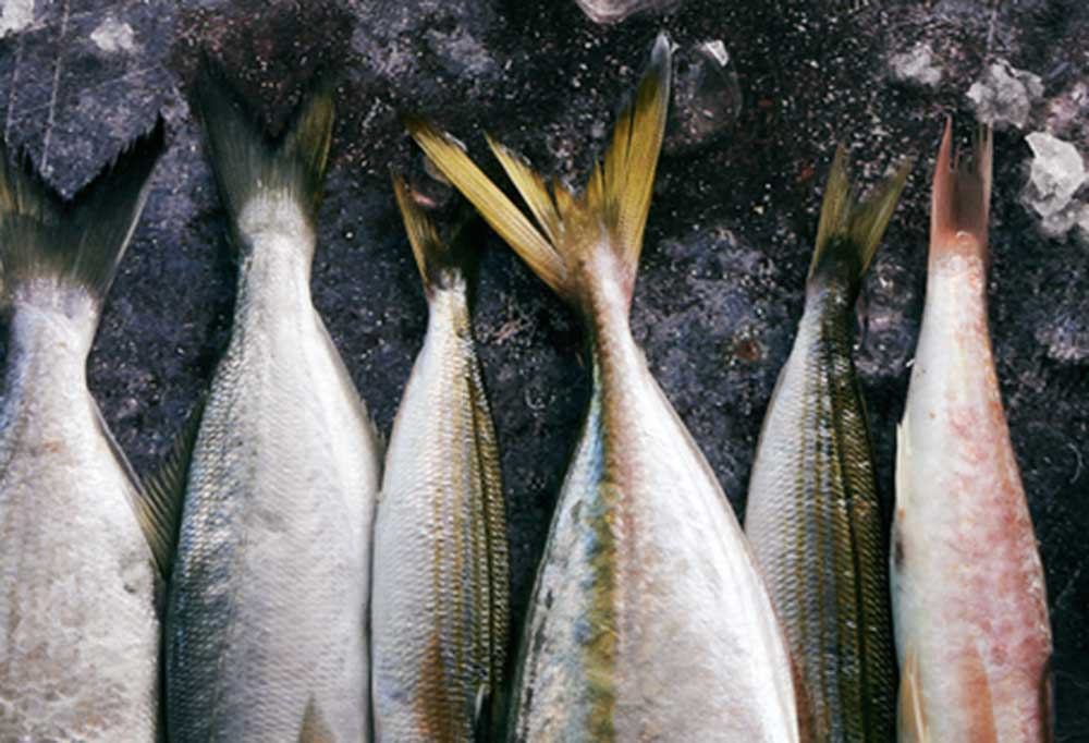 fish tails on a dark background with bits of ice